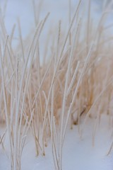 snow wisps (l i v e l t r a) Tags: grass winter snow sticky cling white icy f2 nikkor df