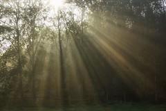 Fence (pszcz9) Tags: przyroda nature natura światło light poranek morning las forest jesień autumn fall pejzaż landscape beautifulearth sony a77 mgła fog mist