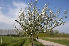 Brabants Landschap (ToJoLa) Tags: canon canoneos60d 2018 lente voorjaar spring sun sky landscape wandeling ontrack noordbrabant natuur nature colors kleuren colours april