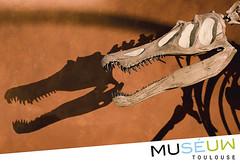 79x54mm // Baryonyx // Muséum de Toulouse //