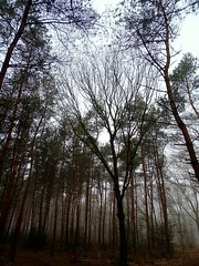 (Suzanne : )) Tags: morning forest trees mist bos bomen ochtend