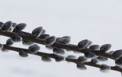 Noch Winter 2018 (arjuna_zbycho) Tags: zima winter schnee las wald forest natur drzewa świątyniaprzyrody natura woods dendroterapia uzdrawiającamoclasu leczniczaenergiadrzewiroślin drzewapoprawiająsamopoczucieidziałająleczniczo wienerwald zufusindenwald spacerpolesie walkinthewoods spazierendurchderwald walkingthroughtheforest spacerkiempolesie