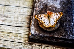 IMG_0865 (LeidPaivaFotografia) Tags: ferro placa borboleta macro natureza d5100 nikon