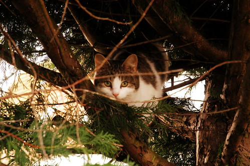 Cassie in a tree.