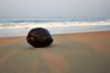 Coconut-navigator, Goa (n1ck fr0st) Tags: coconut goa india ocean navigator
