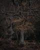 Burnham Beeches - I (J R Oliver) Tags: beech buckinghamshire burnhambeeches cityoflondon england nationalnaturereserve pollard pollards sssi tree trees wood