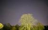 Night sky (d0mokun) Tags: night time sky astro astrophotography tree stars aeroplanes planes twinkle long exposure bearsted england unitedkingdom gb
