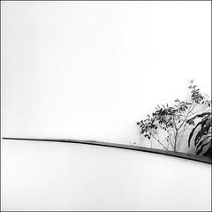 in the niche (Armin Fuchs) Tags: arminfuchs yangon myanmar white plants strandhotel ballroom minimal