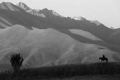 Ridge Rider (peterkelly) Tags: bw digital canon 6d kyrgyzstan asia gadventures centralasiaadventurealmatytotashkent shabdan chonkeminvalley rider horse tree mountain range mountains ridge