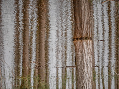 (szélléva) Tags: 2018 alsónyék abstract floodplain forest reflection water patterns nature