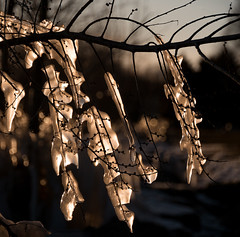 entombed by a spring storm (marianna_armata) Tags: ice storm winter wind light water montreal lachine canal mariannaarmata weed plant macro sun sunset ligth fire cold warm spring p2040740 icicle bokeh