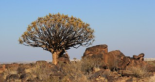 Quiver Tree Forest (6)