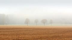 I listen to the wind of my soul (Bernhard Sitzwohl) Tags: fog field trees sulmauen wetlands leibnitz nature outdoor landscape zen minimalism