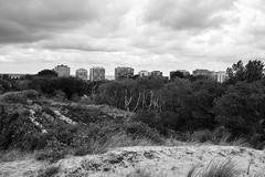 De Panne, Belgium (bm^) Tags: nature dune depanne westvlaanderen belgië belgique belgium bw black white zwartwit boom tree nikon d700 nikond700 zeiss planar5014zf westernflanders duin dunes duinen wolk cloud be