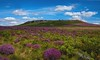 Purple balls (Phil-Gregory) Tags: nikon d7200 tok tokina colours color colour cloudscape clouds 1120mm 1120mmproatx 1120mmf2811 wideangle ultrawide scenicsnotjustlandscapes landscapes peakdistrict higgertor purple heather national naturalphotography naturephotographyna nationalpark naturephotography