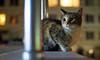 Cat (Engin Süzen) Tags: voigtlander 25mm cat felidae catportait olympus em1markii omd m43turkiye m43 street streetphoto streetphotography handheld handheldphotography
