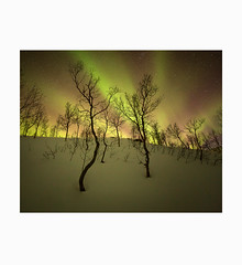 of beauty and consolation. (Frans van Hoogstraten) Tags: aurora northernlight norway senja lake frozen cold tree sky colour green magenta