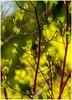 Spring Colours IV (lukiassaikul) Tags: creativephotography photopainting digitalpainting imagemanipulation spring springtime nature plants