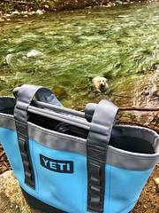 Yeti Camino Carryall, Big Sur River, California (Nancy D. Brown) Tags: yeti caminocarryall travelgear bigsur instagram nala builtforthewild labradorretriever bigsurriver travel california river