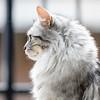 Grace, de kat (Marjan van de Pol) Tags: 5dmarkiv canon canon5d dordrecht katten nederland grace favorite fave faved