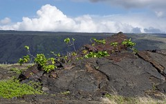 New Life in Unexpected Places (Photoski141) Tags: chainofcratersroad hawaiivolcanoesnationalpark