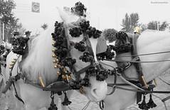 Caballo albino - Albino horse (ricardocarmonafdez) Tags: andalucía sevilla ciudad city urbanscape streetphotography holidays fair aprilfair feriadeabril caballos caballistas horses jinetes raiders color edition edicion effect 60d 1785isusm canon ricardocarmonafdez