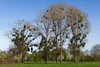 Monheim - Landschaft am Rheindamm IV (KL57Foto) Tags: 2018 april frühling germany kl57foto monheim monheimamrhein nrw natur nordrheinwestfalen olympus penemp2 baum bäume trees