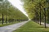 walk in the park (H.Baum) Tags: park hannover green frühling spring trees bäume baum