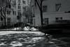 light&shadow@a corner of Düsseldorf 3 (Amselchen) Tags: bicycle slowshutter bnw mono monochrome blackandwhite light shadow germany street streetphotography sony a7rii alpha7rm2 sigma mc11 canon ef50mmf18ii sonyilce7rm2