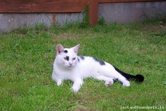 Tue, Mar 20th, 2018 Lost Male Cat - R526, Limerick (Lost and Found Pets Ireland) Tags: lostcatr526limerick lost cat r526 limerick march 2018