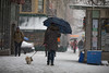 Images shot on a snow day – Wednesday March 21, 2018. Benjamin Kanter/Mayoral Photo Office. (nycmayorsoffice) Tags: manhattan nyc newyork newyorkcity upperwestside dog snow snowday snowing snowstorm umbrella unitedstates us