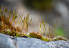 moss sprouts on a stone (Danyel B. Photography) Tags: moss sprouts stone nature natur stein moos sprossen bokeh macro makro close nah details canon 200mm plant pflanze