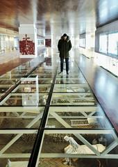 Puesto de observación (xirmi) Tags: centrodeinterpretación sanjuandelapeña monasterionuevo visita lavidadelosmonjes turismo aragón huesca mobilephotography