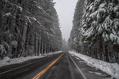Snowy Road (Old as you feel, Fujinite) Tags: snow forest road snowy winter cold snowing foresthill california nikon d750 irix 11mm wide angle nature outdoor landscape