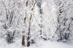 A Moment of Madness (Rich Walker75) Tags: snow trees tree woods woodland winter landscape landscapes landscapephotography canon eos100d efs1585mmisusm devon