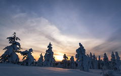 Lapland sunset (Mathieu Pierre) Tags: lights lapland canon 7dmark2 7dmarkii sigma14mmf18 sunset trees winter nature frost arctic hill finland nuit night sky neige ciel