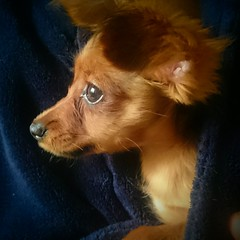 IMG_20180320_213928_545 (angieodette) Tags: russian toy russiantoy cutedog