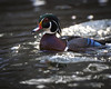 Male Wood Duck (redforester) Tags: anthonycedrone outdoors earlyspring creek water duck nature colorful redeye