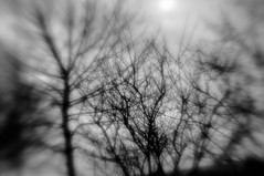 Cold April Spring (katsrevenge42) Tags: clouds evening lensbaby spring dreamy dreamscape