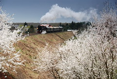 Spring by DoctorMP - Spring has finally arrived in Poland and on the Wolsztyn - Poznań line