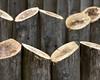 Cuts (Chancy Rendezvous) Tags: chancyrendezvous davelawler blurgasmcom blurgasm wood cut logs sawed stand trees stumps bark