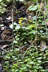 (Alexandre Dolique) Tags: d850 nikon la relatiere chamrousse belledonne alpes populage des marais