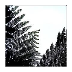Dentelle végétale / Colombie (PtiteArvine) Tags: feuillage arbres dentelle végétation colombie nature