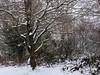 20180318-142226 (aderixon) Tags: naturelandscapehill natureplanttree natureweathersnow pontypridd midglamorgan walesuk nature snow weather