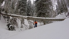 Fallen Tree (29in.CH) Tags: winter snow fatbike ride 20032018 fallen tree