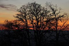Sunset from Skinner Butte (dsgetch) Tags: sunset silhouette shadow oregonsunset pnwsunset pnw pnwlife cascadia pacific northwest pacificnorthwest trees tree eugeneoregon eugene oregon willamettevalley lanecounty