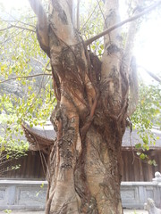 Trang An with Công Family (bagnaramatt) Tags: cây