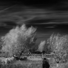 on a windy day (old&timer) Tags: background infrared longexposure composite conceptual song4u oldtimer imagery digitalart laszlolocsei