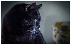 Discovering the operation of the flash (Pepenera) Tags: cat cats chat gatto gato gatti g