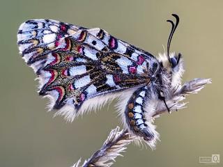Mariposa de colores 3